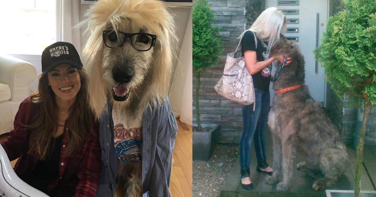 People are Posting Pics Of Their Irish Wolfhounds And It's Amazing How Large They Are